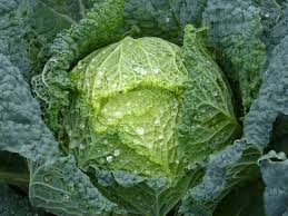 Using Green Cabbage Leaves